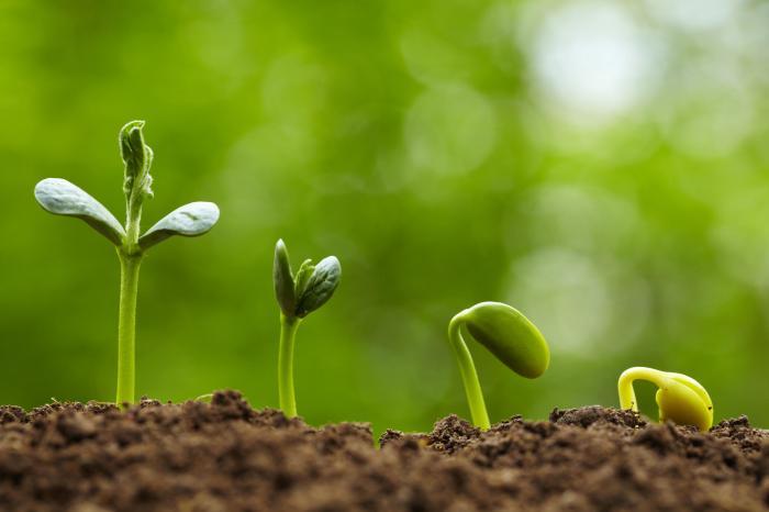 Resultado de imagen de plantar